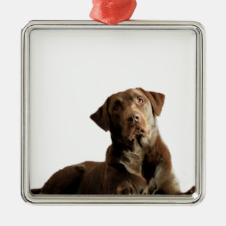 Chocolate Lab Laying Lounging on the word DOG Metal Ornament