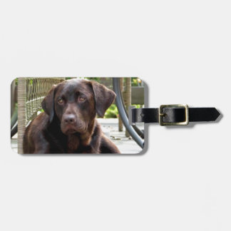 Chocolate Lab Tag For Luggage
