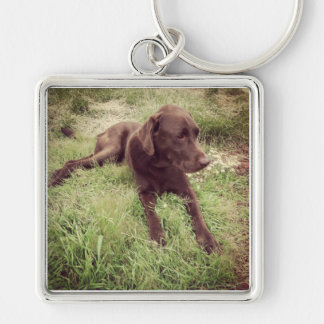 Chocolate Lab Lying In Grass Photograph Keychain