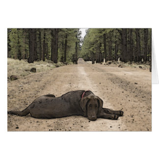 Chocolate Lab On A Forest Trail Card