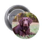 Chocolate Lab Pinback Buttons