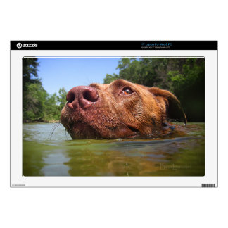 """Chocolate Lab Pit Dog Swimming 9 Decal For 17"""" Laptop"""