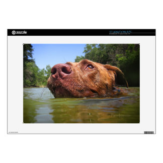 Chocolate Lab Pit Dog Swimming 9 Decal For Laptop