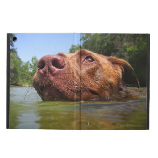 Chocolate Lab Pit Dog Swimming 9 iPad Air Cover
