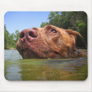 Chocolate Lab Pit Dog Swimming 9 Mouse Pad