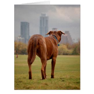 Chocolate Lab Pit Mix Dog - Austin TX Card