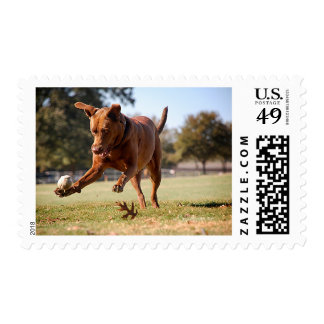 Chocolate Lab Pit Mix Dog Chasing Ball Postage