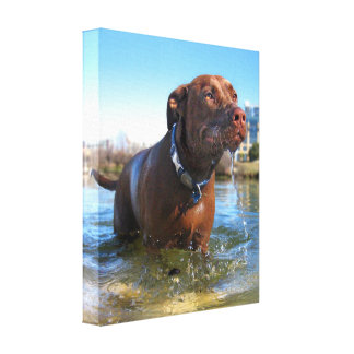 Chocolate Lab Pit Mix Dog Drooling Canvas Print