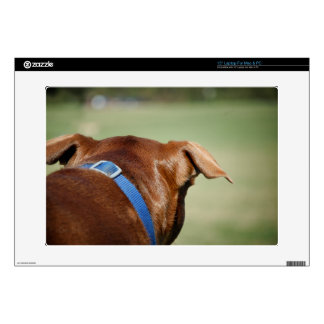 "Chocolate Lab Pit Mix Dog Ear Close Up 15"" Laptop Skins"