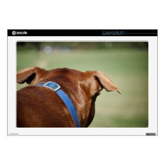 Chocolate Lab Pit Mix Dog Ear Close Up Skin For Laptop
