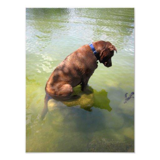 Chocolate Lab Pit Mix Dog Fishing 3 Photo Print