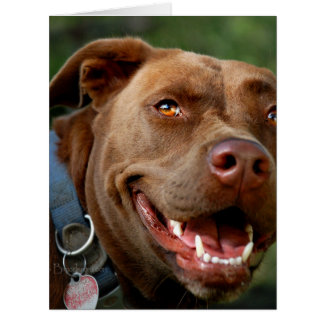 Chocolate Lab Pit Mix Dog Happy Smile Card