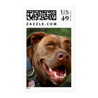 Chocolate Lab Pit Mix Dog Happy Smile Postage