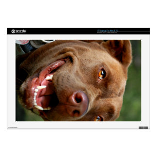 Chocolate Lab Pit Mix Dog Happy Smile Skin For Laptop