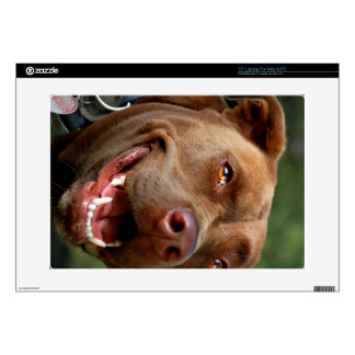 "Chocolate Lab Pit Mix Dog Happy Smile Skins For 15"" Laptops"
