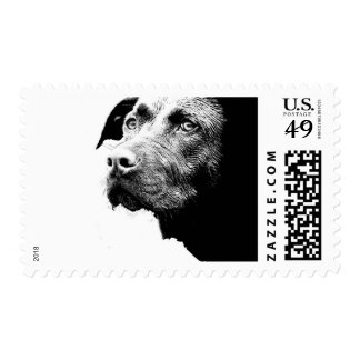 Chocolate Lab Pit Mix Dog in Black and White Postage