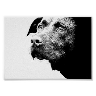 Chocolate Lab Pit Mix Dog in Black and White Poster