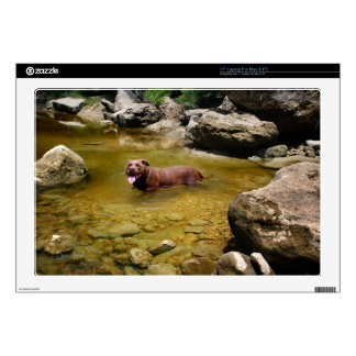 Chocolate Lab Pit Mix Dog in Swimming Hole Skin For Laptop
