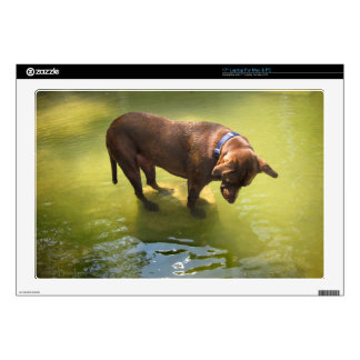 Chocolate Lab Pit Mix Dog Looking for Fish Laptop Decal