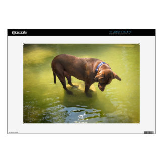 Chocolate Lab Pit Mix Dog Looking for Fish Skin For Laptop