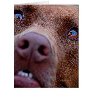 Chocolate Lab Pit Mix Dog Nose Card