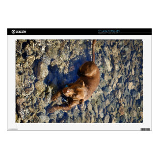 """Chocolate Lab Pit Mix Dog On The Rocks Skin For 17"""" Laptop"""