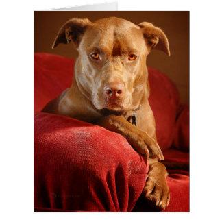 Chocolate Lab Pit Mix Dog Portrait 3 Card