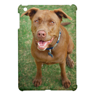 Chocolate Lab Pit Mix Dog Portrait 4 Case For The iPad Mini