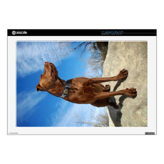 """Chocolate Lab Pit Mix Dog Portrait 6 Decal For 17"""" Laptop"""