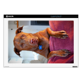 Chocolate Lab Pit Mix Dog Portrait Decal For Laptop