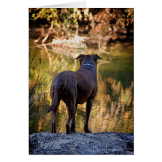 Chocolate Lab Pit Mix Dog Serene Card