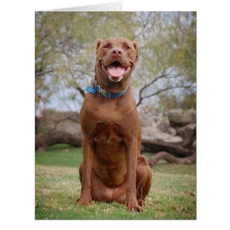Chocolate Lab Pit Mix Dog Smiling 2 Card