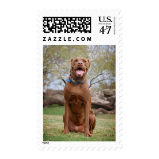 Chocolate Lab Pit Mix Dog Smiling 2 Postage