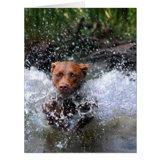 Chocolate Lab Pit Mix Dog Splashing 4 Card