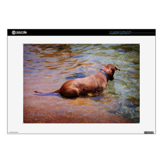"Chocolate Lab Pit Mix Dog Swimming 10 15"" Laptop Decal"