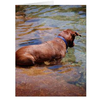 Chocolate Lab Pit Mix Dog Swimming 10 Card