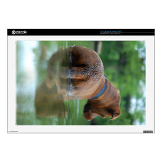 Chocolate Lab Pit Mix Dog Swimming 4 Decals For Laptops