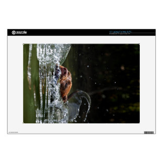 Chocolate Lab Pit Mix Dog Swimming 5 Decals For Laptops