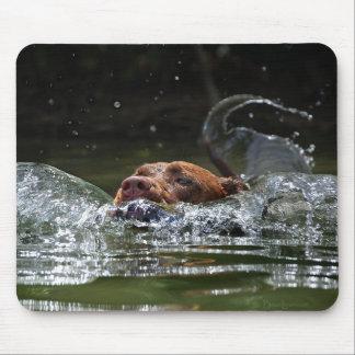Chocolate Lab Pit Mix Dog Swimming 5 Mouse Pad