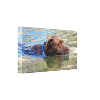 Chocolate Lab Pit Mix Dog Swimming 8 Canvas Print