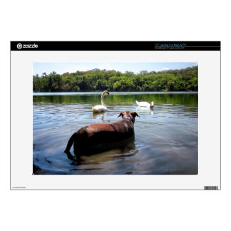 "Chocolate Lab Pit Mix Dog Swimming With Swans 15"" Laptop Decal"