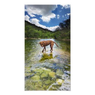 Chocolate Lab Pit Mix Dog Walking on Water Art Photo