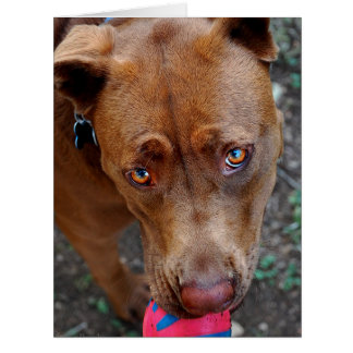 Chocolate Lab Pit Mix Dog with Ball 2 Card