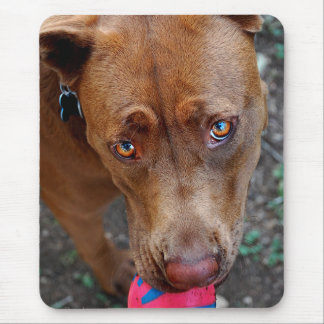 Chocolate Lab Pit Mix Dog with Ball 2 Mouse Pad