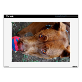 Chocolate Lab Pit Mix Dog with Ball 2 Skins For Laptops