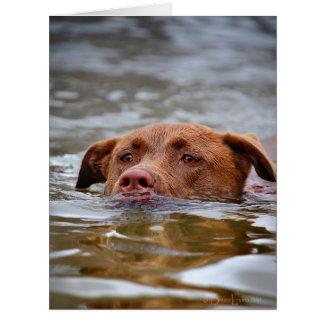 Chocolate Lab Pit Mix Puppy Dog Swimming Card