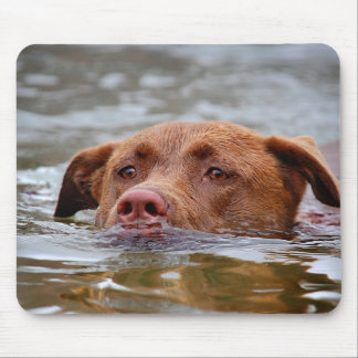 Chocolate Lab Pit Mix Puppy Dog Swimming Mouse Pad