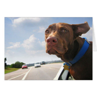 Chocolate Lab Pit Puppy Backseat Driver Greeting Cards