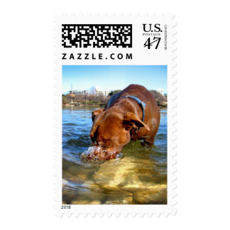 Chocolate Lab Pit Puppy Blowing Bubbles Postage