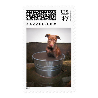 Chocolate Lab Pit Puppy in a Bucket Postage